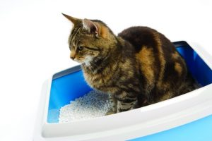 how to train cat to poop in litter box