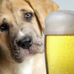 Thanks for Supporting Yappy Hour!