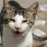 Marion/Polk Community Cat Program to Hold Stakeholder Meeting