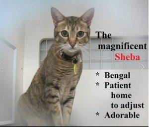 Sheeba 2