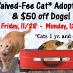 75 Pets Found Homes During Waived-Fee Cat Adoptions & $50 Off Dogs – Nov. 28 to Dec. 1