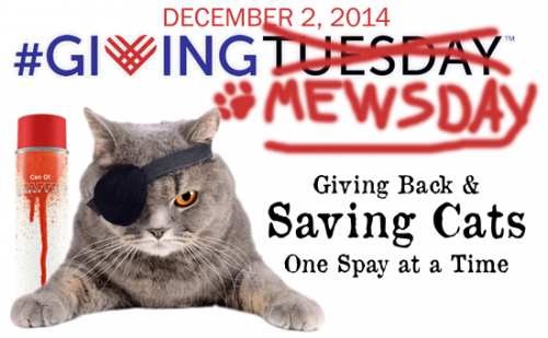 #givingmewsday - Giving Back & Saving Cats One Spay at a Time