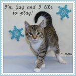Favorite Cats of Marilyn and Al – December 2