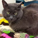 Pewter the Cat is Sure to Shine in 2015