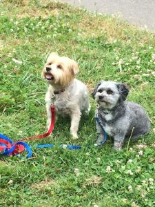 orchard heights dogs