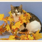 Favorite Cats of Marilyn and Kim – Nov 2nd