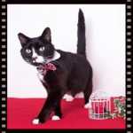 Favorite Cats of Marilyn and Kim – May 24th