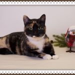 Favorite Cats of Marilyn and Kim – Dec. 13th