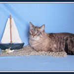 Favorite Cats of Marilyn and Kim – Aug 16th