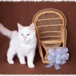 Favorite Cats of Marilyn and Kim – Dec. 7th