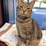 Meet Cloudy and Quincey: Two Very Different Cats that Need Great Homes