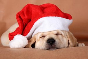 PETtalks: Christmas Puppy Panel @ Willamette Humane Society | Salem | Oregon | United States