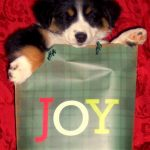 Giving a Christmas Puppy?