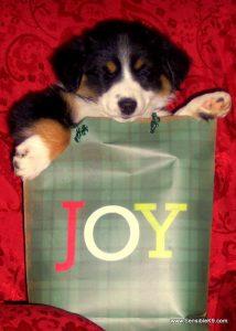 joy gift