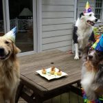Hosting Family Gatherings With Party Animals
