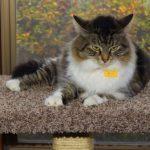 Cooperative Pet Care