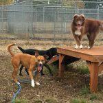 Back to School Basics: Pet Enrichment