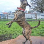 This Week's Featured Adoptable Dogs @ Willamette Humane Society by Martha Russell