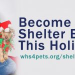 Join us for Holiday Shelter Elves Camp