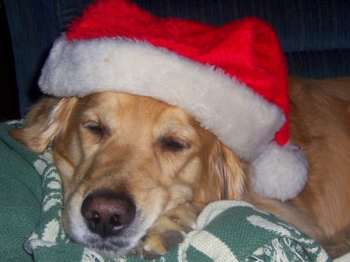 Make sure everyone in your household has a very Merry Christmas with these holiday dog safety tips.