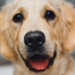 Holiday Pet-acular: Pet-Friendly Resolutions