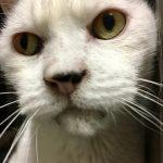 The Cat Blog: Meet Cyrus, Lorraine, Bagheera and Kit-Kat