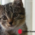 Cheers to Kittens and Santiam Brewing on May 2nd