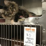 Meet Your New Best Friend! Adoption Fees Waived on Cats (6 Months and Older) Until July 4.