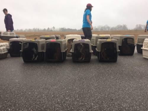 Alabama tornado dogs