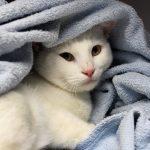Meet Adoptable Cats Leonardo, Saki, Lotus, and Jinx