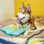 Shelter Storytime: Reading is Fun for Everyone