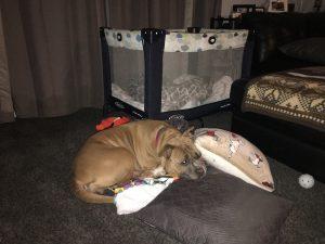 Hera and the dog crib