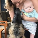 Read more about the article A Big Dog Finds a Happy Family