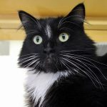 Featured Felines: 4 Holiday Cats