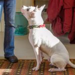 Join us for PETtalks: Training Deaf Dogs (Feb. 13, 2020)