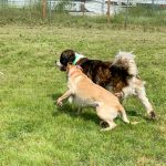 3 Social Enrichment Ideas for Dogs and Cats