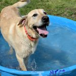 Emergency Planning for You and Your Pets