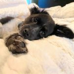 Pet-Proof Your Foster Home