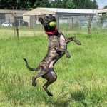 Physical enrichment for dogs and cats
