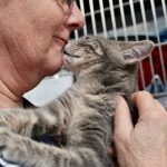 Visit Our Adoptable Cats at PetSmart in 2021