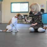 Socialization in a Pandemic: Planning Ahead for Puppies