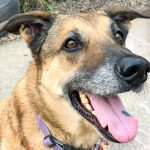 This Week's Featured Adoptable Dogs
