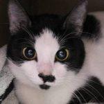 Career Opportunity – Full-Time Veterinary Assistant