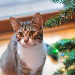 10 Ways to Help Shelter Pets this Holiday Season