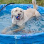 Read more about the article 10 tips to help your pets beat the summertime heat