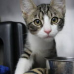 Willamette Humane Society Holds Clear the Shelter Event in Conjunction with PetSmart Charities in Salem, Oregon