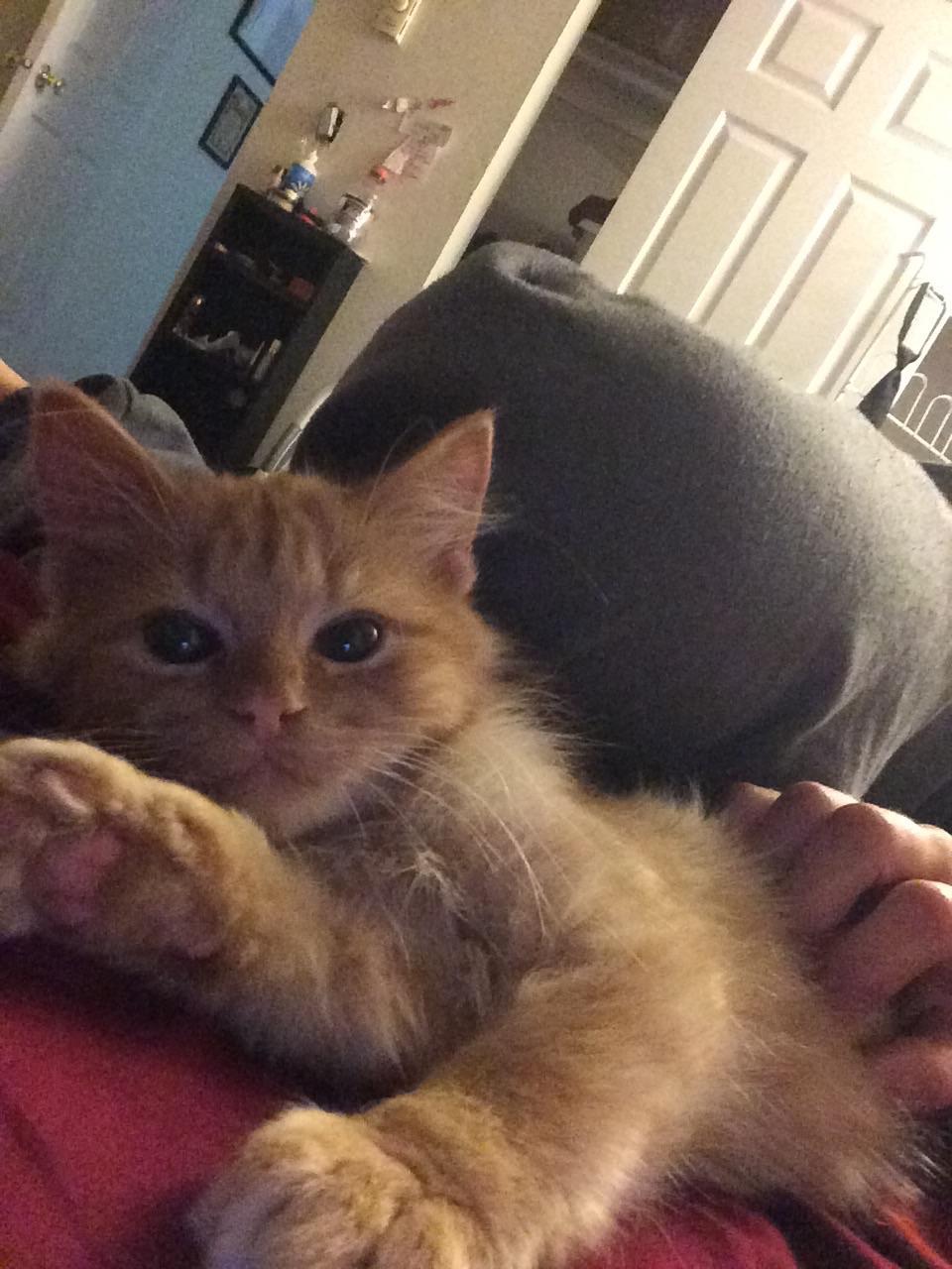Photos of Your Pet